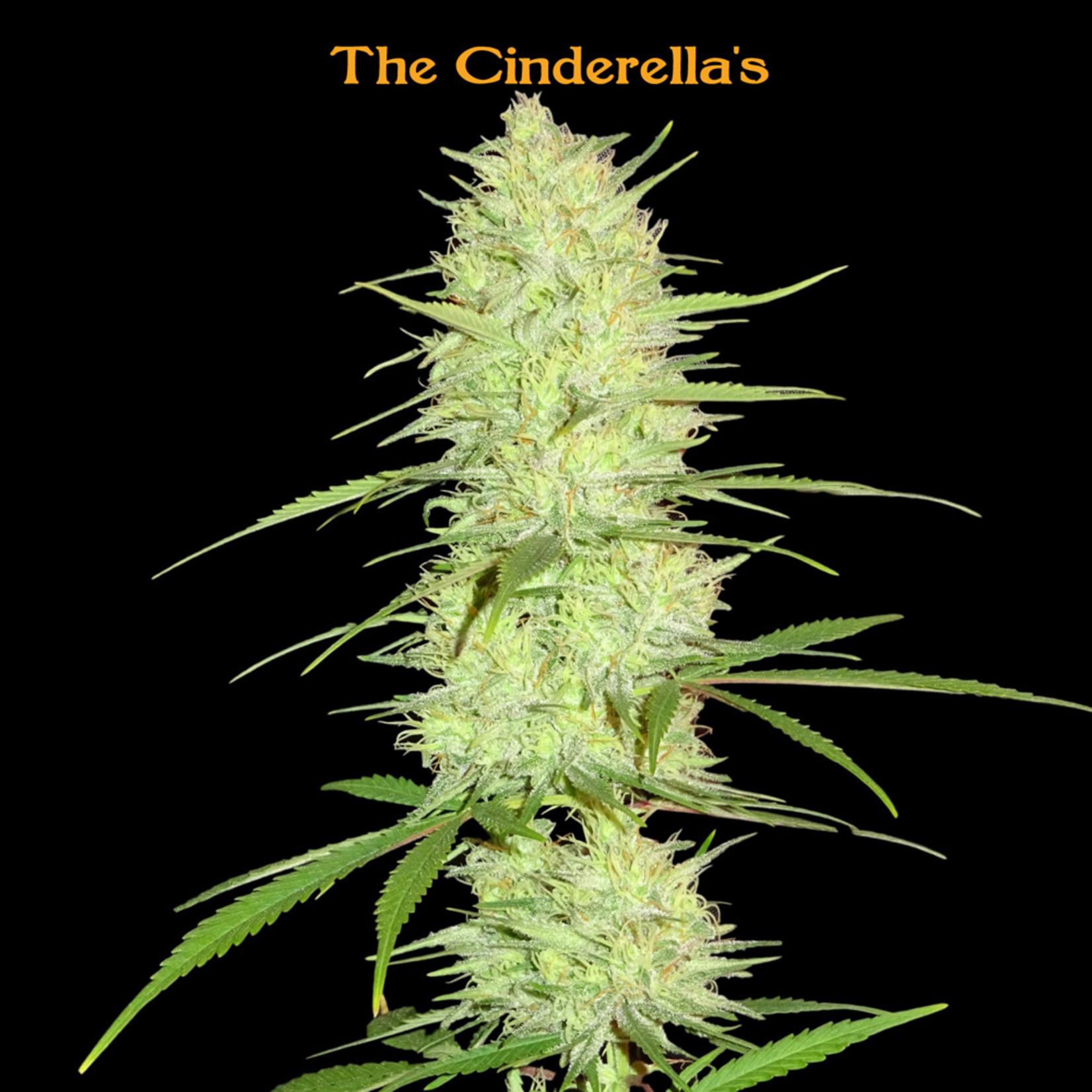 Cinderella's cannabis seeds
