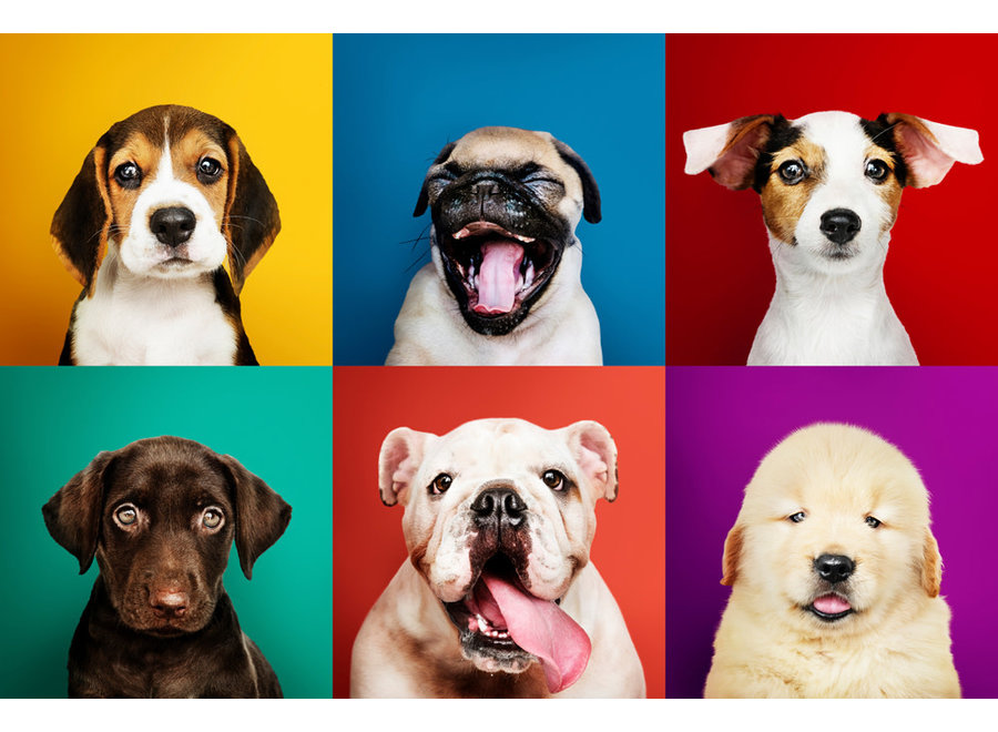 Funny Dogs Digitalprint 80x120cm Acrylic Glass