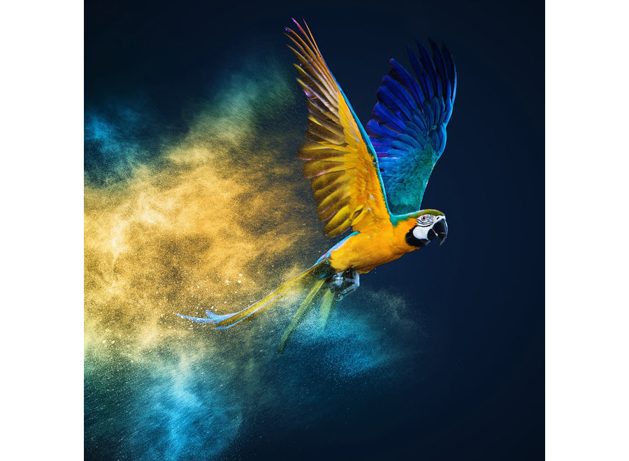 Flying Parrot Digitalprint 95x95cm Acrylic Glass