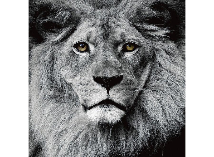 The Lion King Black White Digitalprint 80x80cm Safety Glass