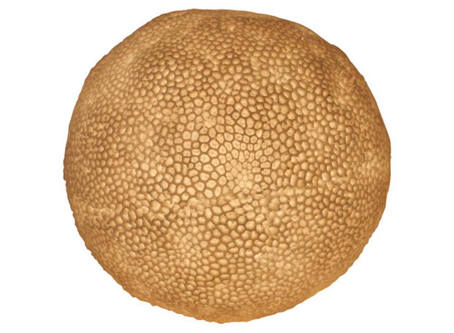 Fine Asianliving Tischlampe aus Sandstein Korallenball 31.5x28.5cm
