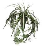Chlorophytum green in pot Stan grey