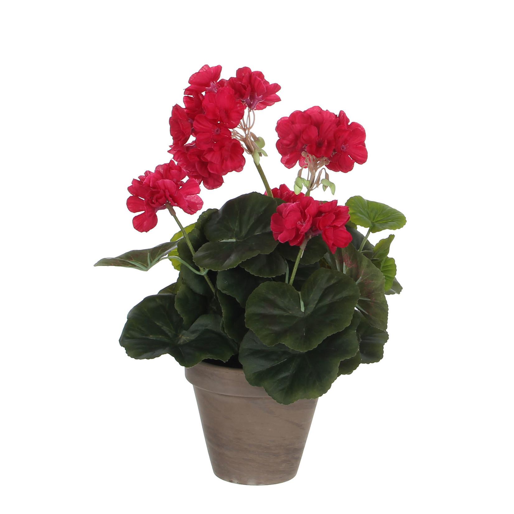 Geranium d. pink in pot Stan grey