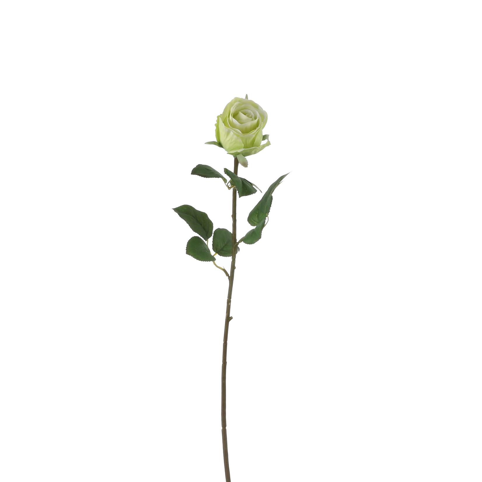 Rose green - l69cm