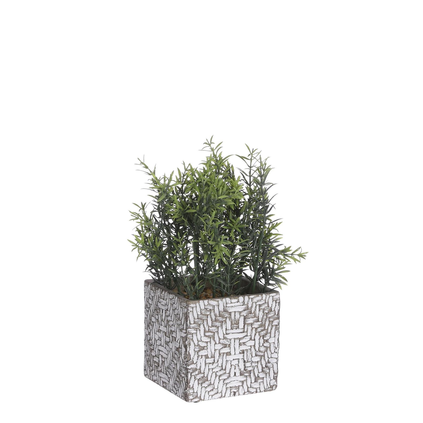 Herbs in pot green