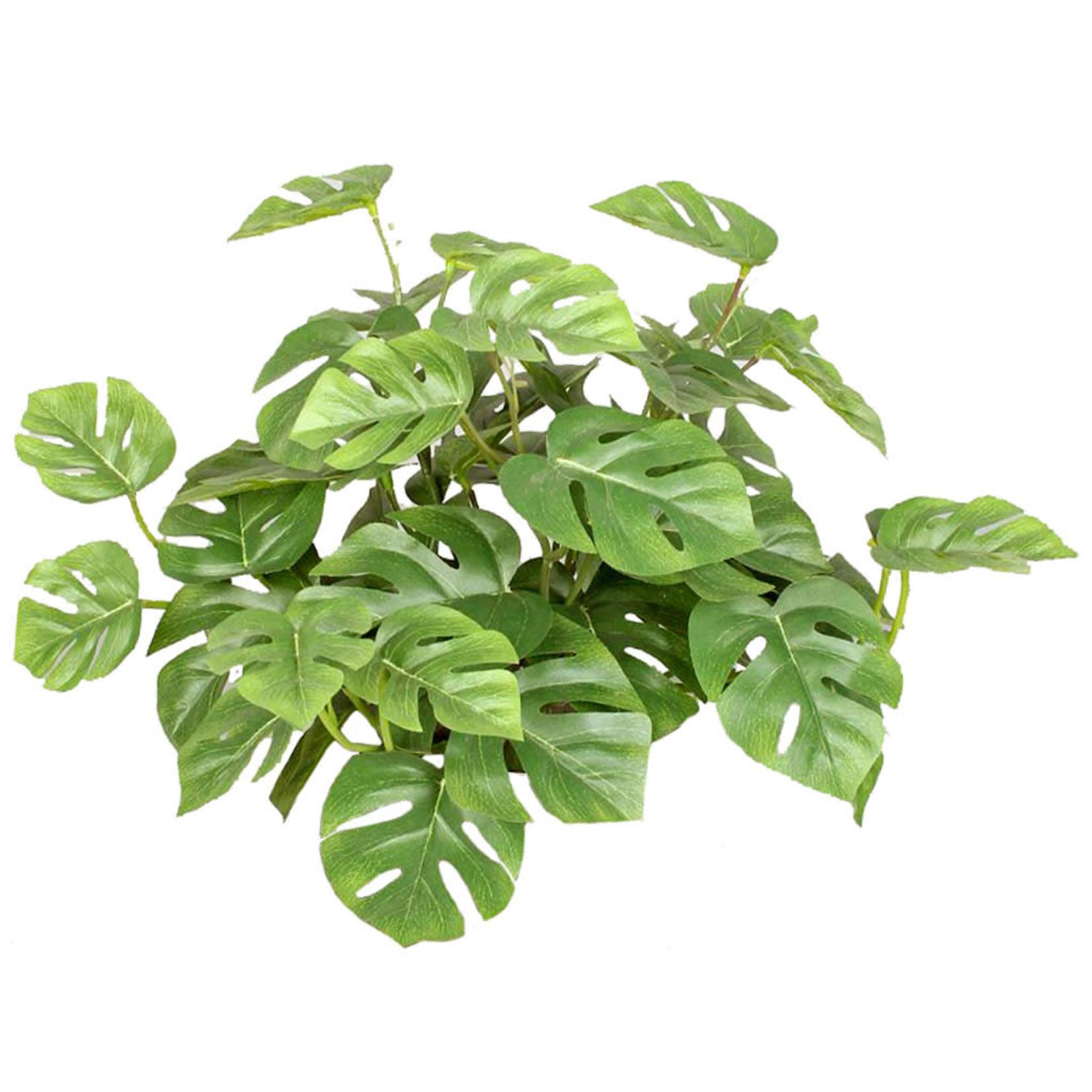 Plants Split Philo Bush YF 30cm FR