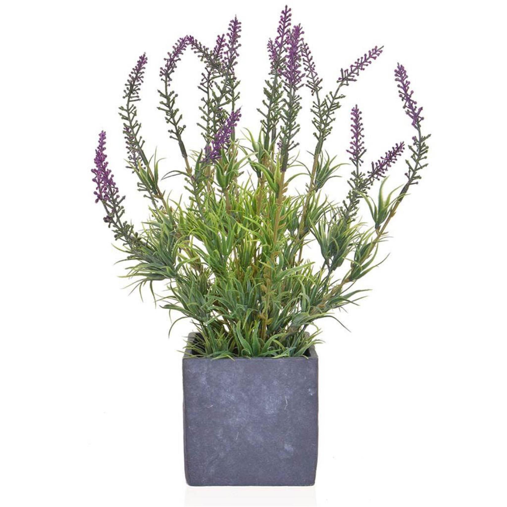 PP Lavender in Slate Pot JM 36cm