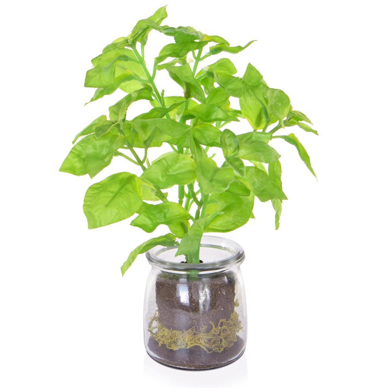 PP Green Basil in Vase JA 24cm