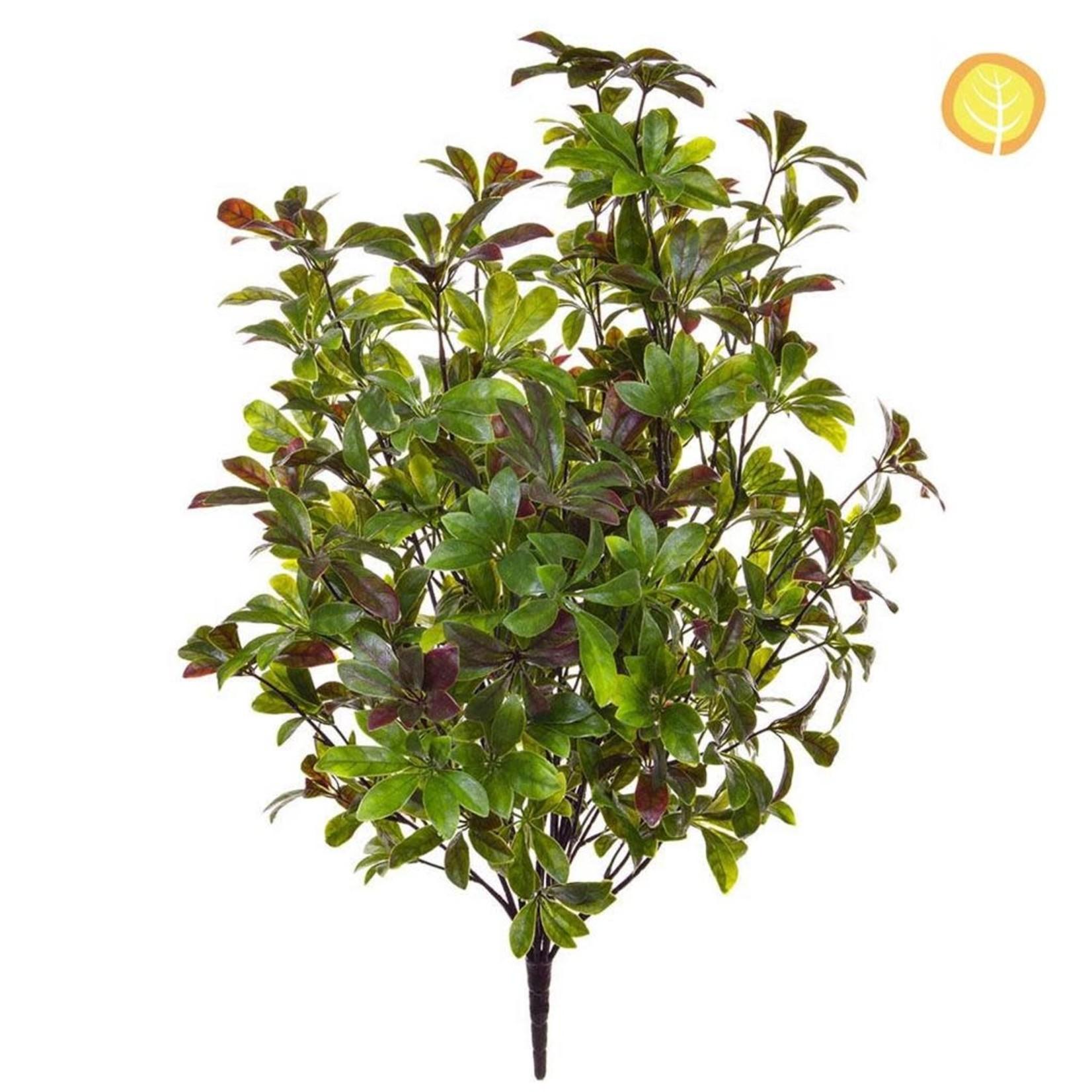 Plants Pawpaw 80cm SF UV