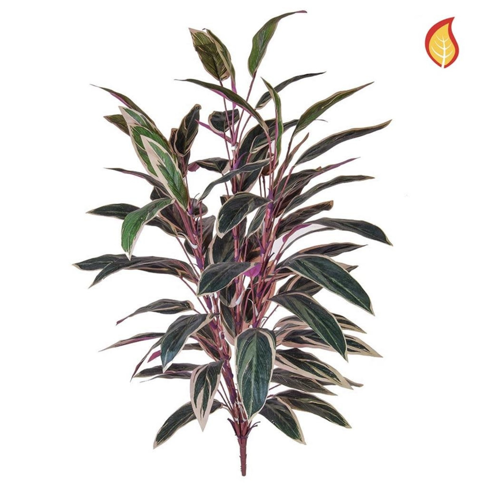 Plants Caladium Bush Green / Pink 85cm SF - Fire Rated