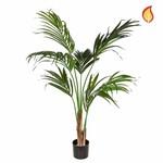 Palm Kentia SF 150cm FR