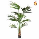 Palm Kentia SF 180cm FR