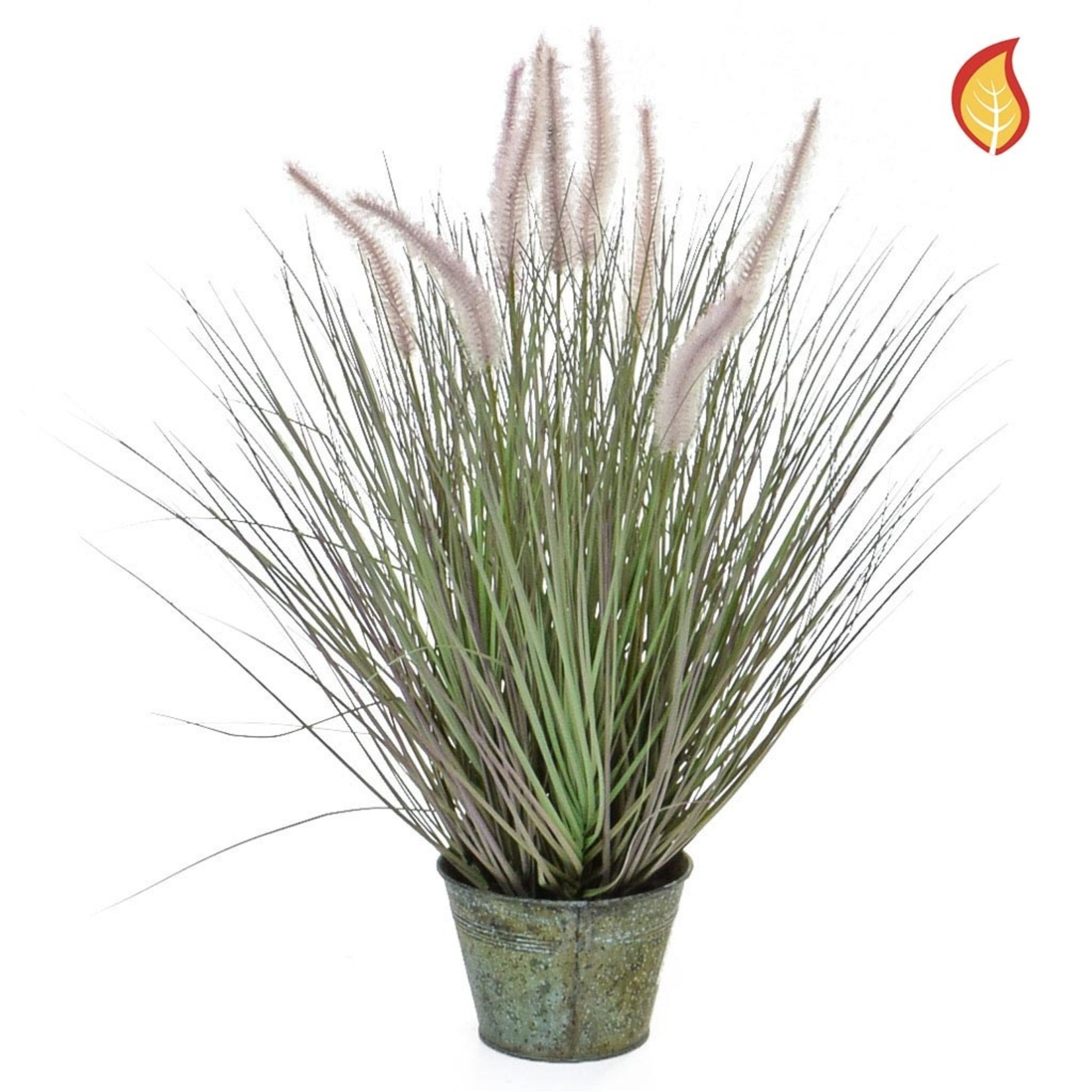Grass Dogtail Grass with metal pot 58cm - Fire Rated