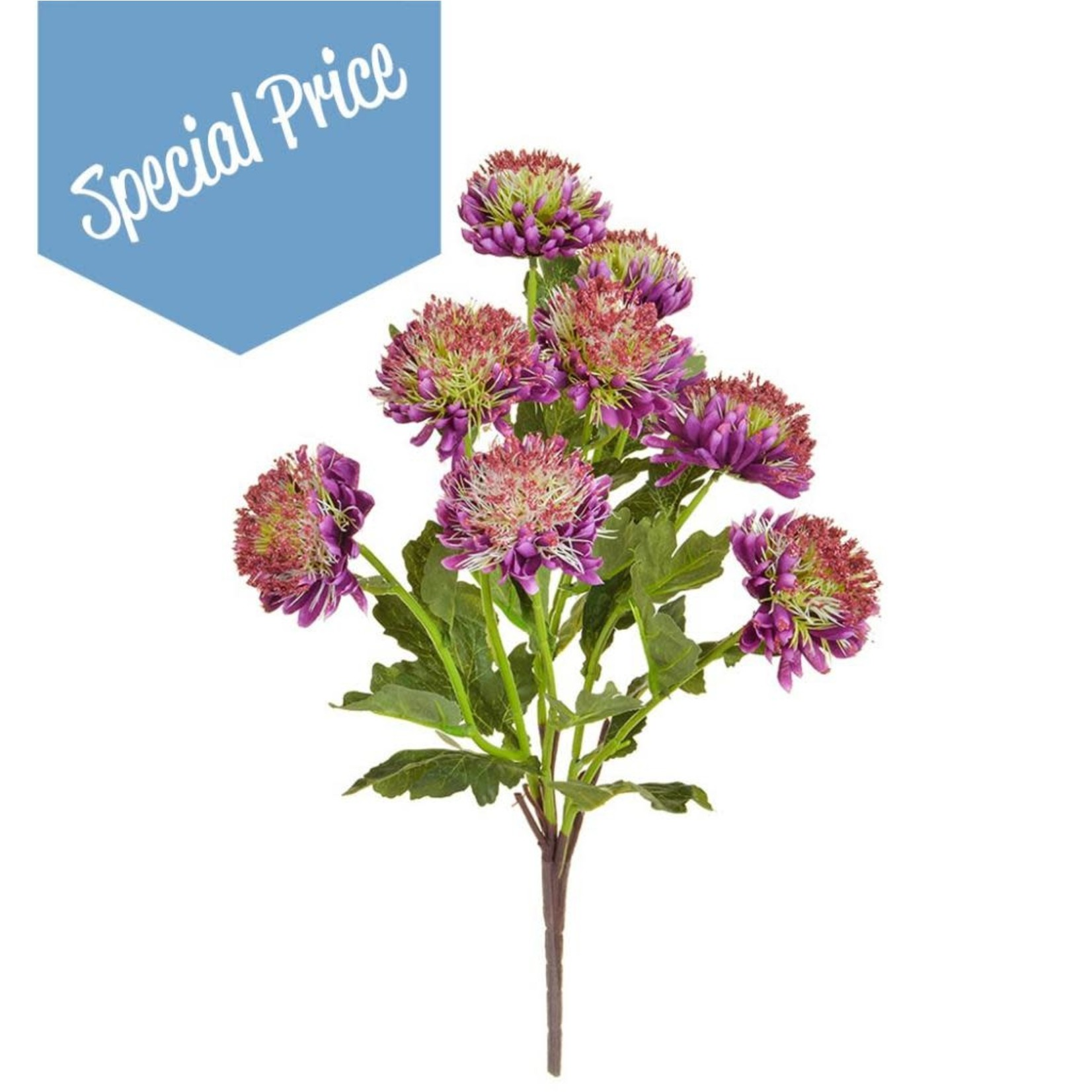 Plants Flowering Chrysanth Purp GB 43cm