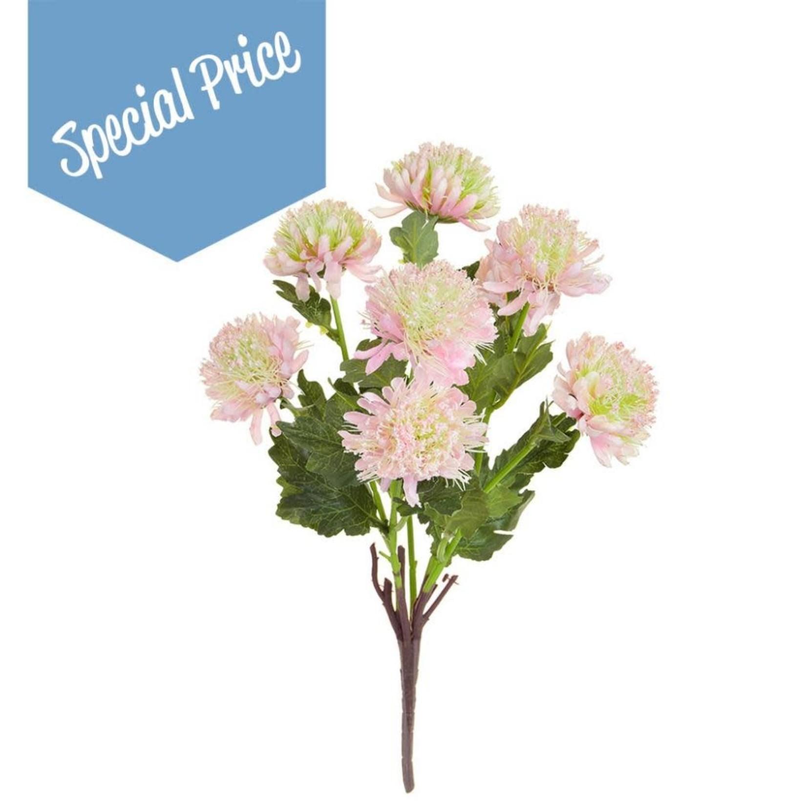 Plants Flowering Chrysanth PK GB 43cm