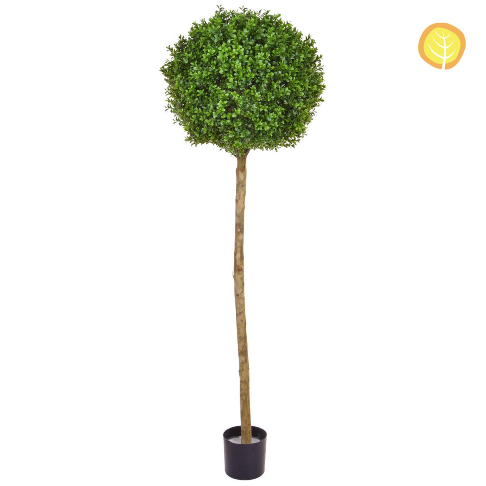 Topiary New Buxus Ball Tree 150cm - UV  Resistant