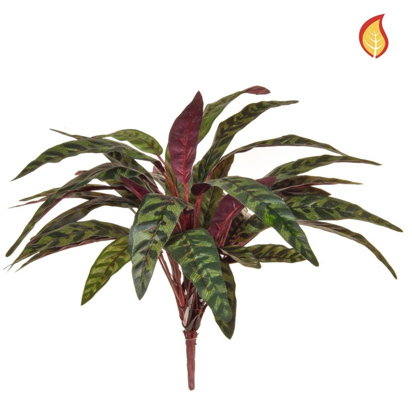 Plants Peacock Bush 45cm - Fire Rated