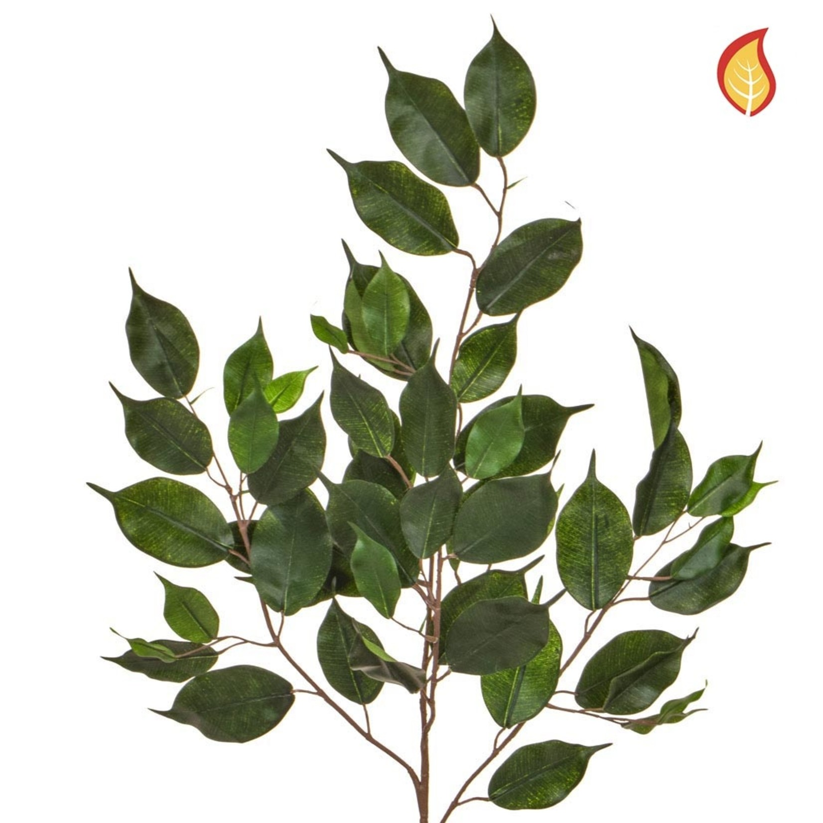 Foliage Ficus Exotica Grn 55lvs 75cm - Fire Rated