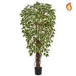 Ficus Liana Variegated 150cm - Fire Rated