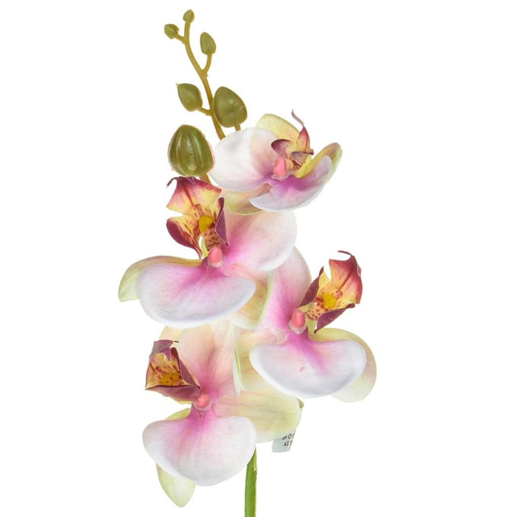 SF Orchid Phalaenopsis XJ Sm Bty 57cm