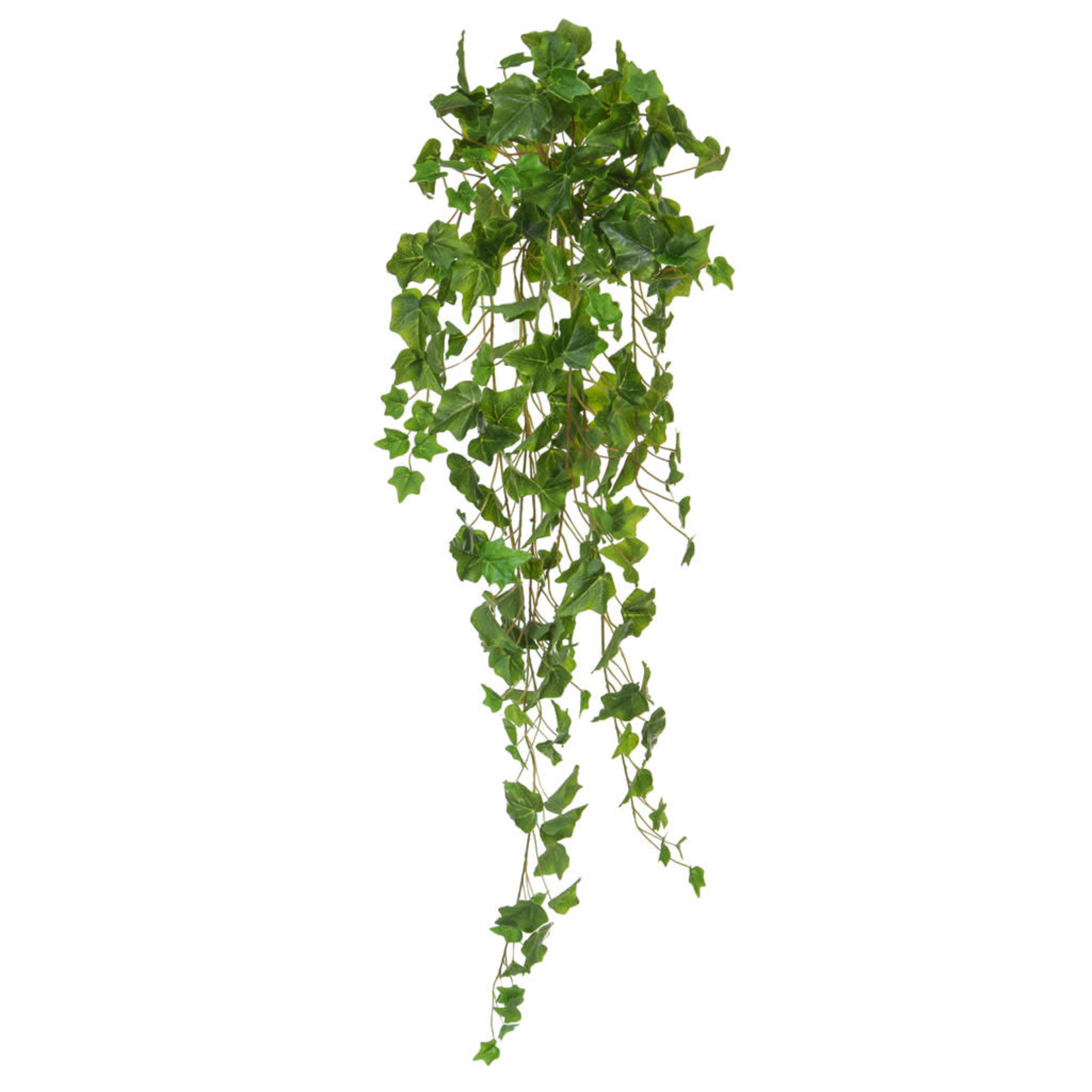 I & T English Ivy Bush Green 100cm