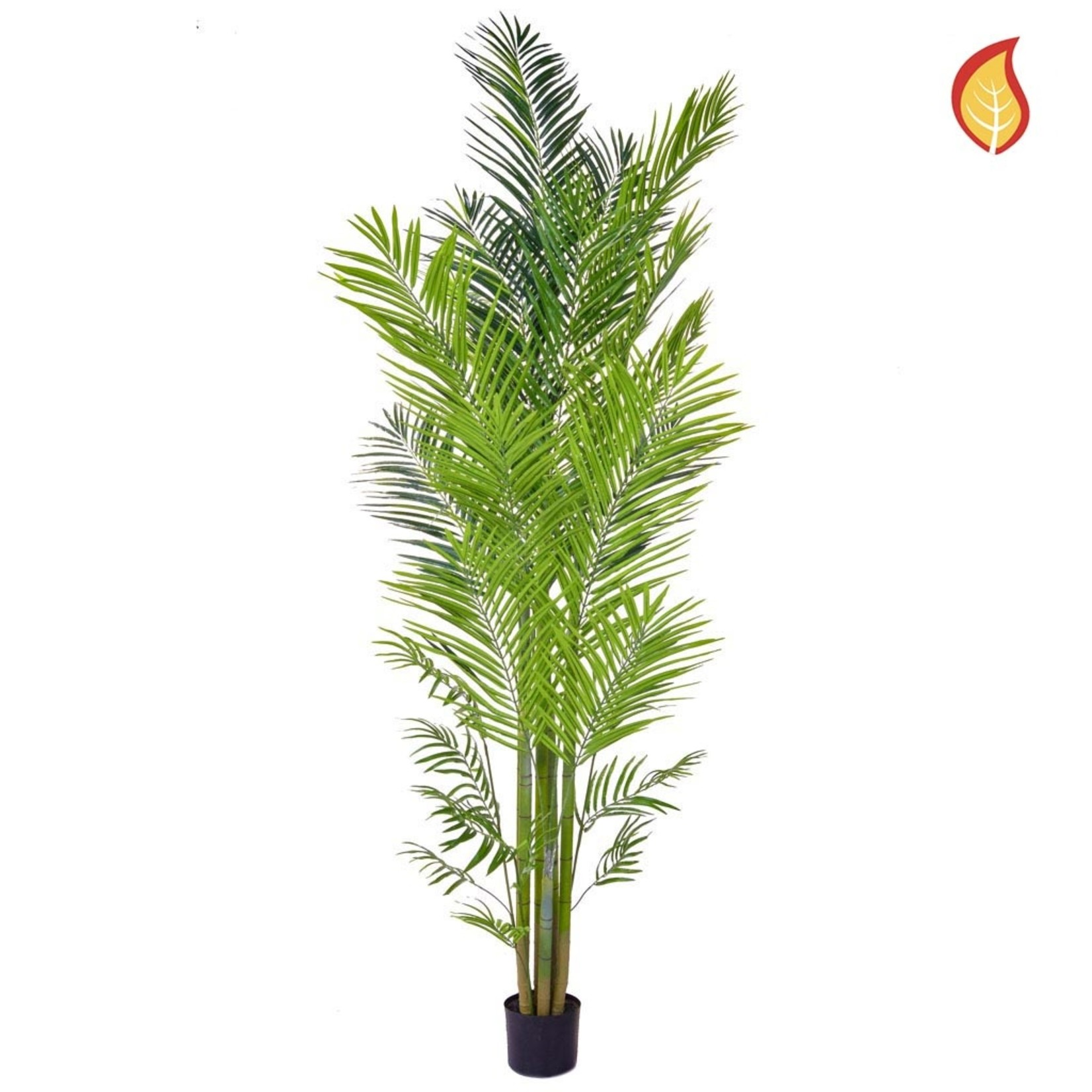 Palm Areca YF 240cm - Fire Rated