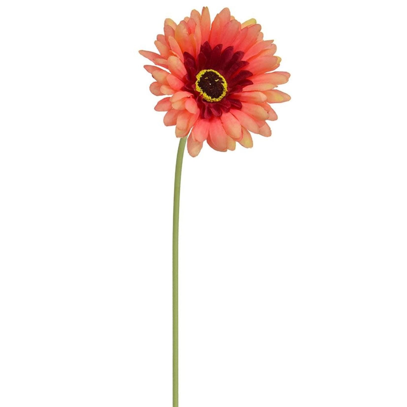 SF Gerbera Fuchsia W 50cm