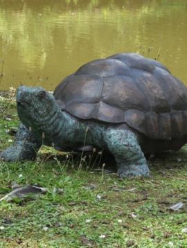 Schildpad beeld Indy