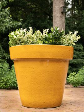 Gele bloempot Izamal