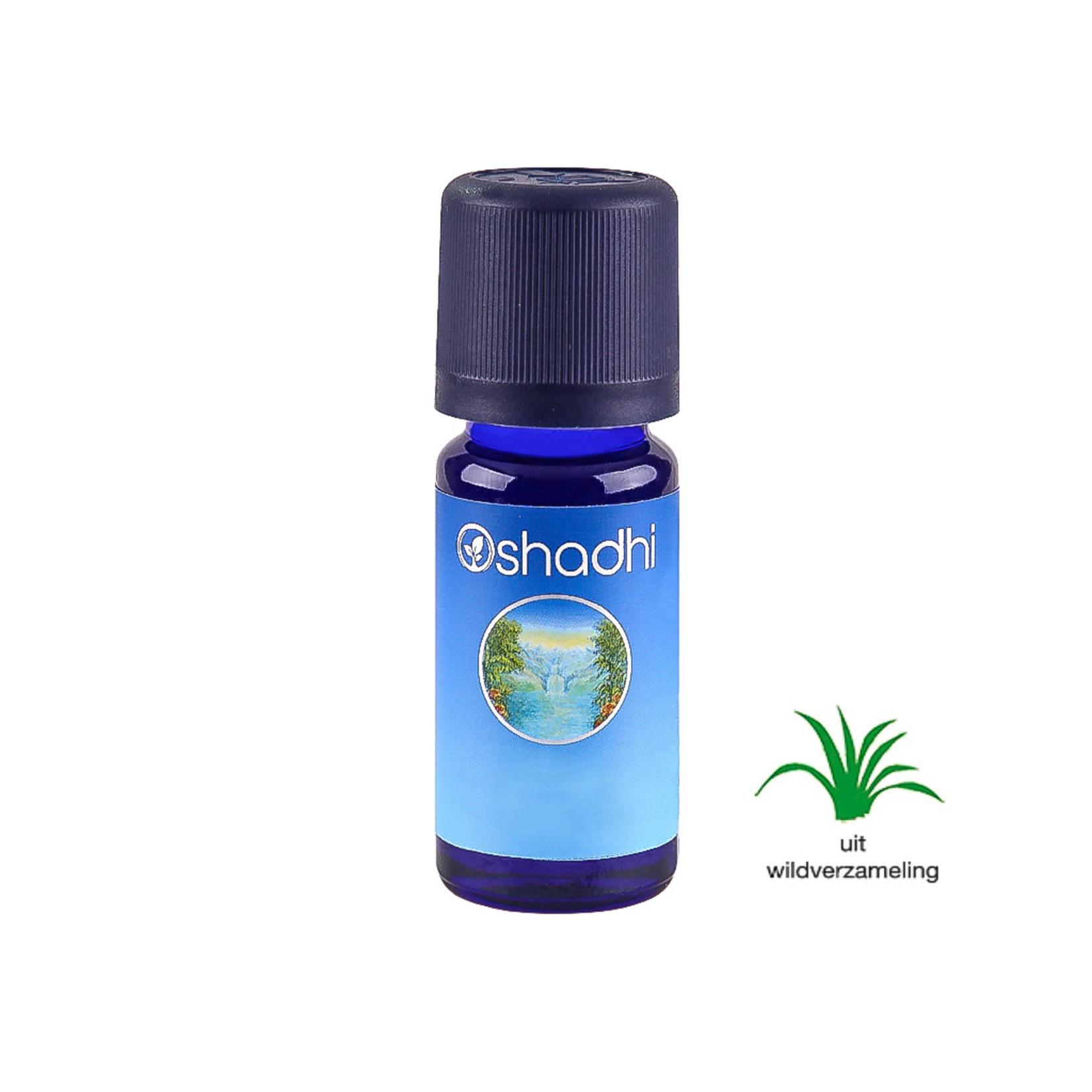 Oshadhi Citroeneucalyptus Oshadhi - insectenverdrijver - 10ml