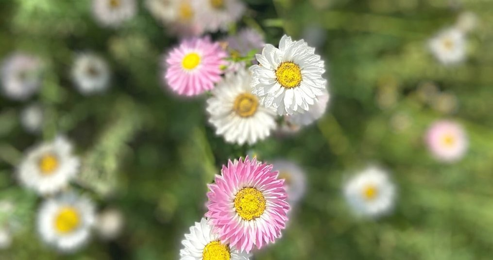 Hoe droogbloemen bewaren?