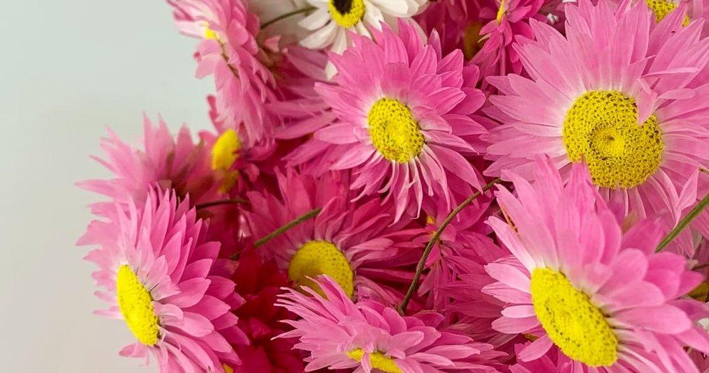 Waarom droogbloemen kopen?