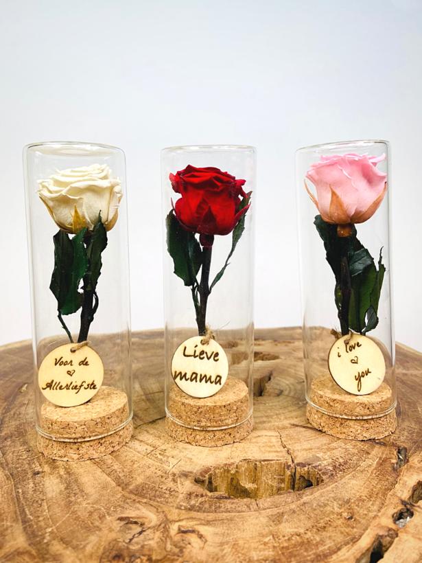 Speciaal Cadeau | kleine Longlife roos in reageerbuisje