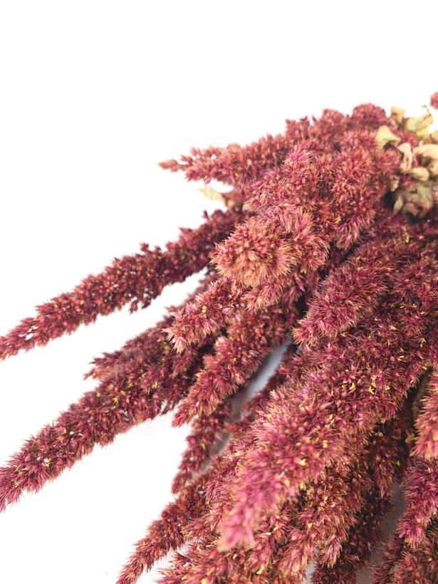 Amaranthus 'rood'