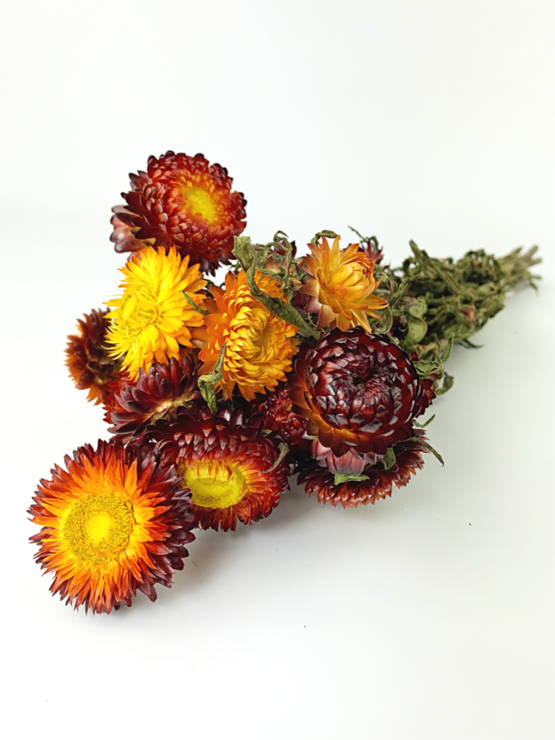 Helichrysum 'rood'