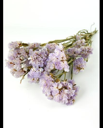Statice Sinuata 'lilac'