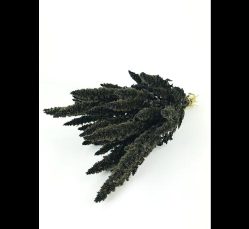 Amaranthus 'zwart'