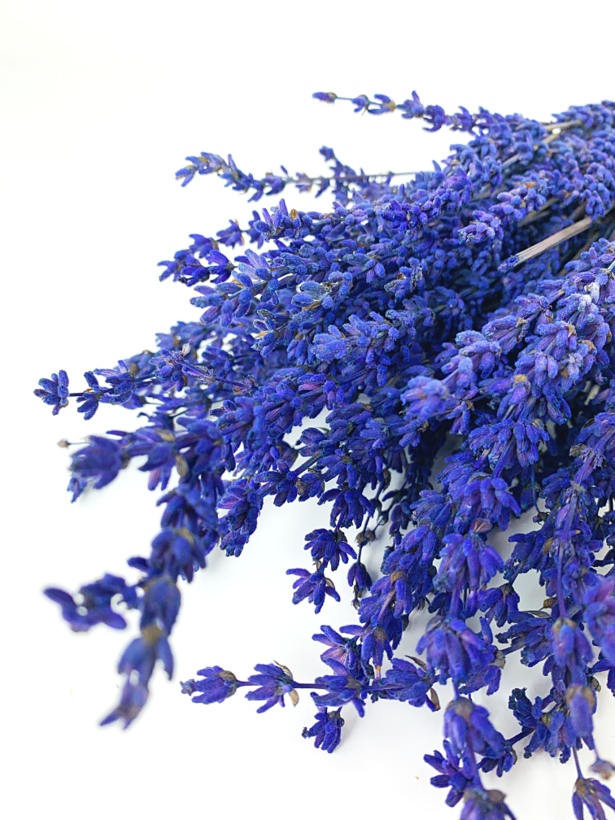 Lavendel 'Super Blue'