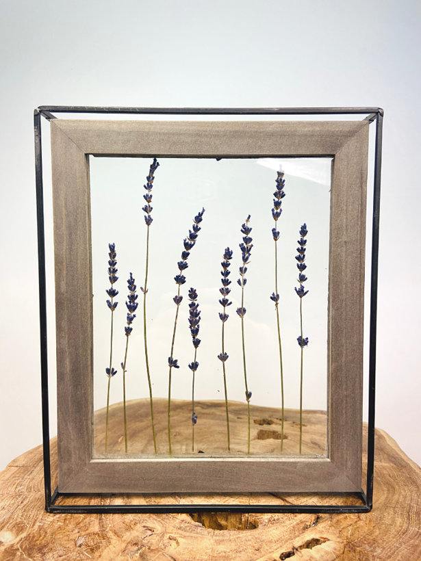 Droogbloemen in fotolijst (medium) - lavendel