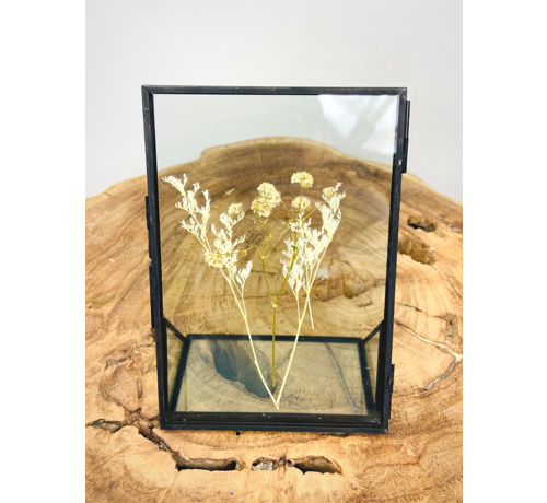 Limonium in fotolijst zwart - klein