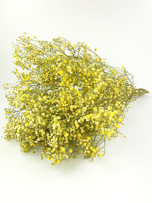 Gipskruid 'geel'
