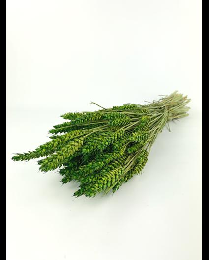 Tarwe 'groen'