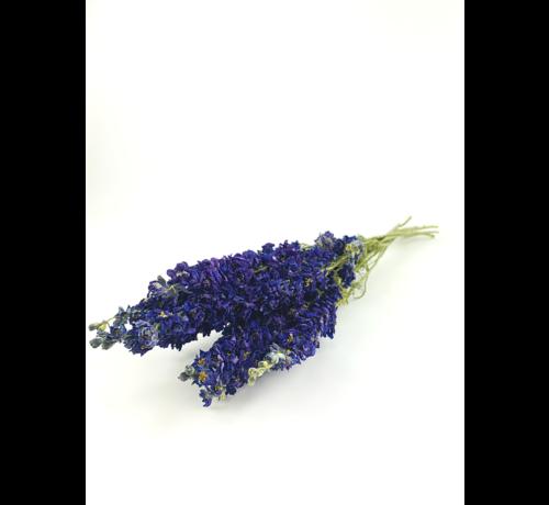 Delphinium 'dark blue'