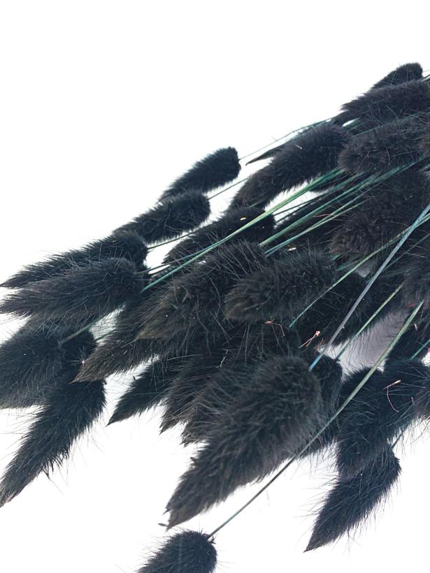 Lagurus Ovatus 'zwart'