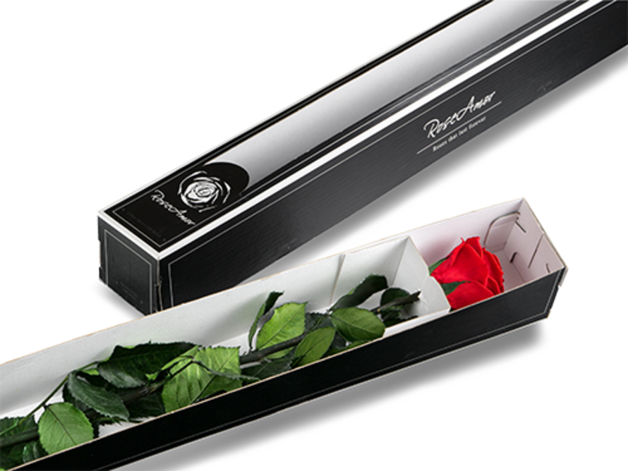 Longlife Roos 70cm in giftbox