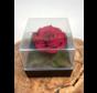 Longlife Roos in transparante giftbox