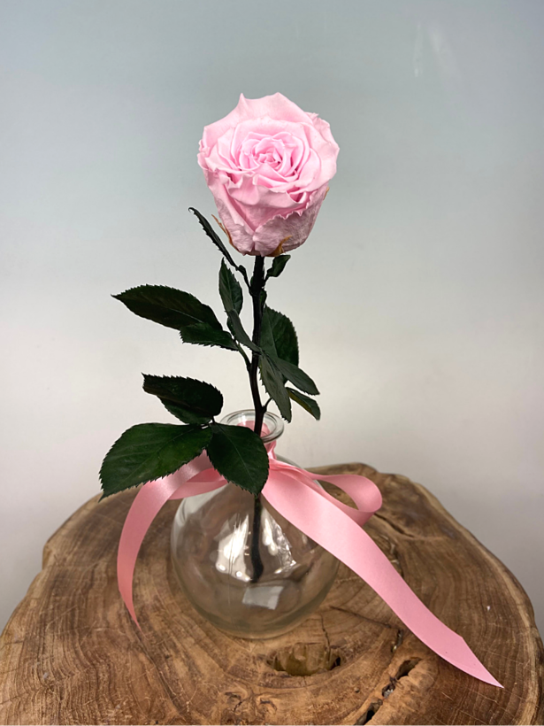 Longlife Roos roze incl. gratis vaas