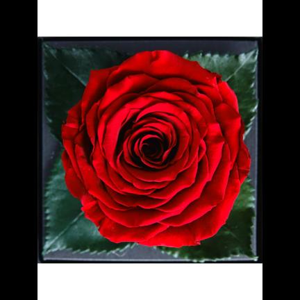 Longlife rozen