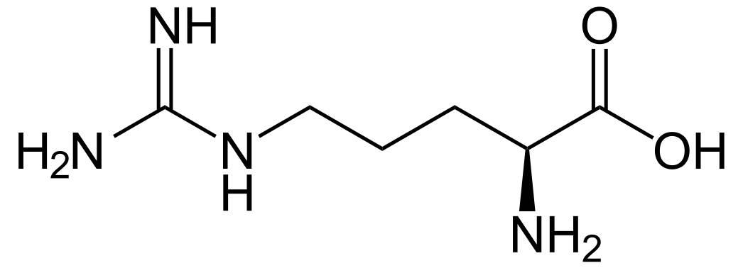 L-Arginin als pflanzliches Potenzmittel nutzen