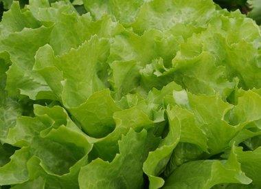 Groenten zaden